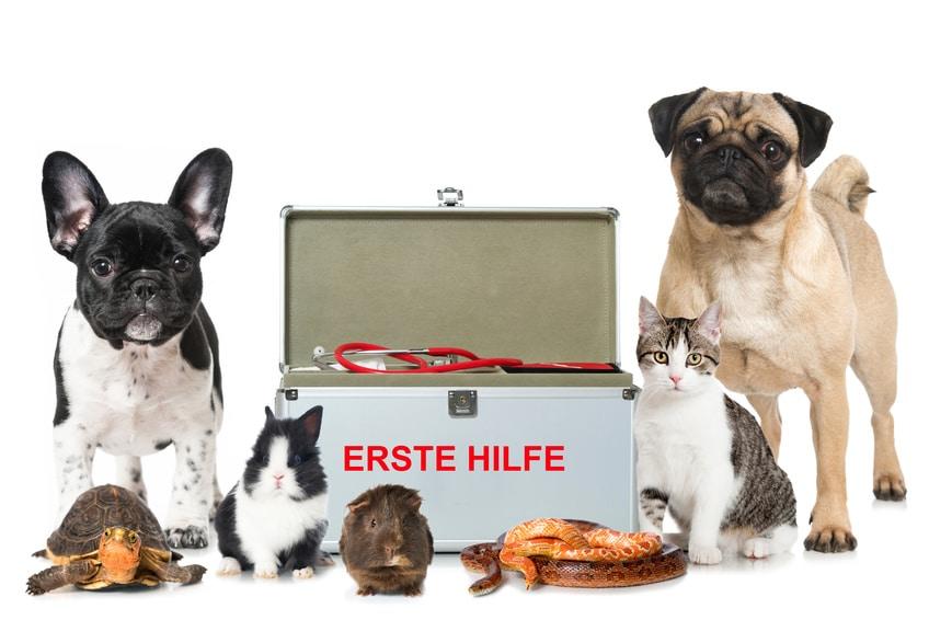 Haustiere rund um einen offenen Erste Hilfe Koffer