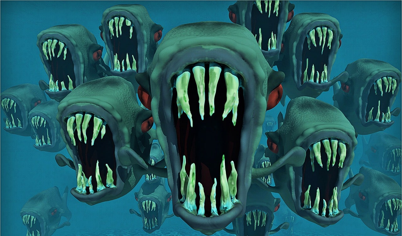 Piranhas wie in einem Albtraum
