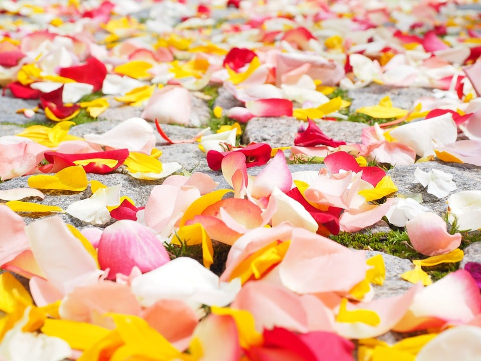 Ein Teppich aus gelben und roten Rosenblättern