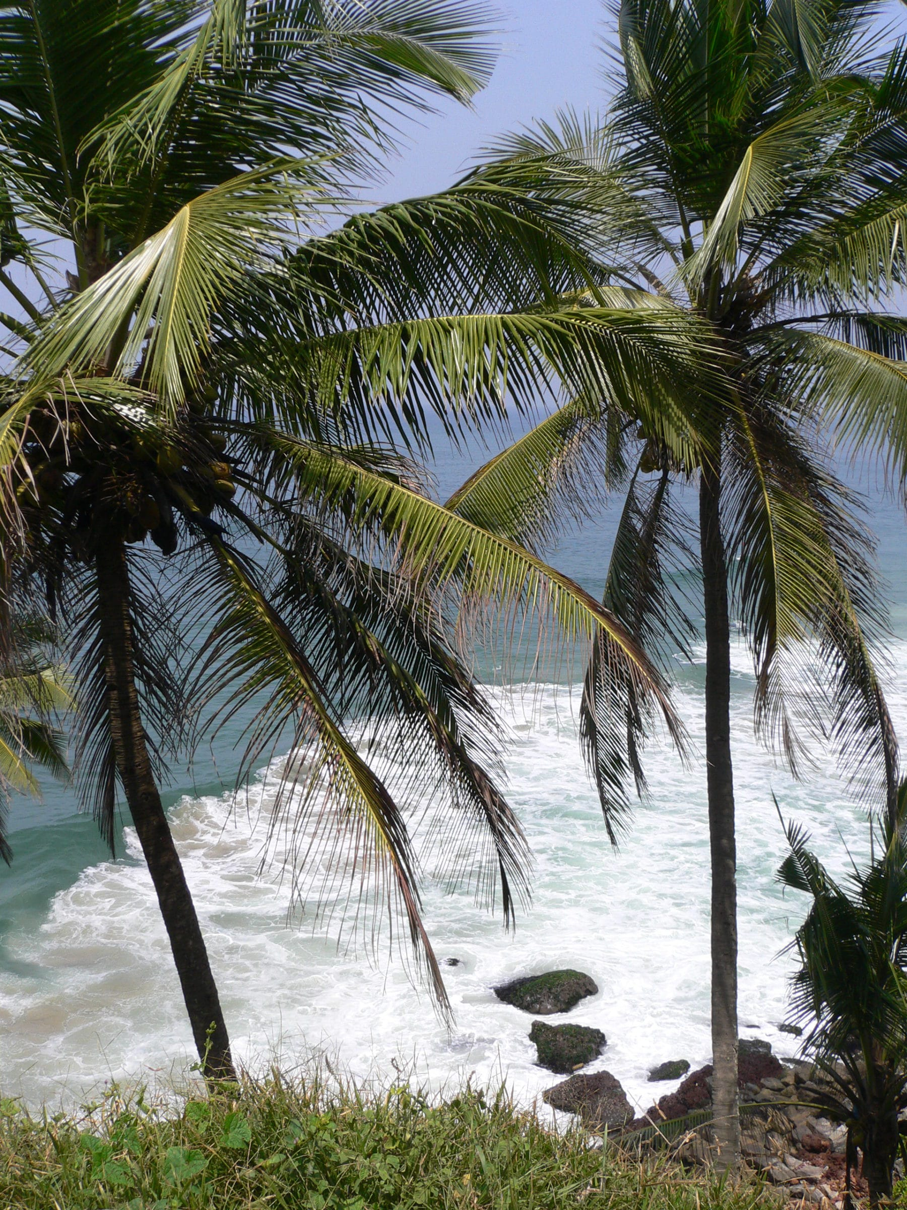 Palmenstand