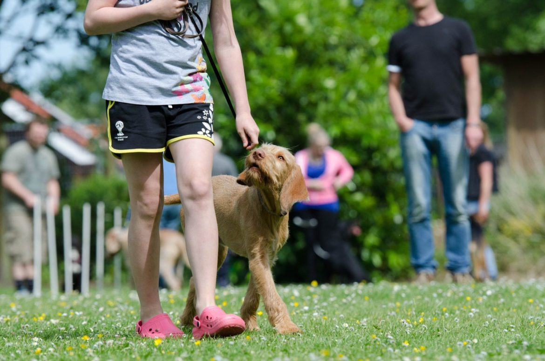 Hundeerziehung: Diese Kommandos sollte jeder Hund kennen