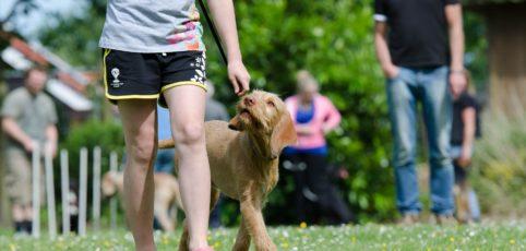 Junge Frau trainiert ihren Hund auf einer Wiese