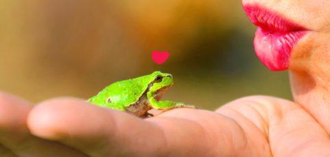 Frau hat Frosch auf der Hand und will ihn küssen