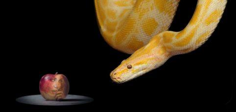 Apfel mit Frauengesicht und eine gelbe Schlange