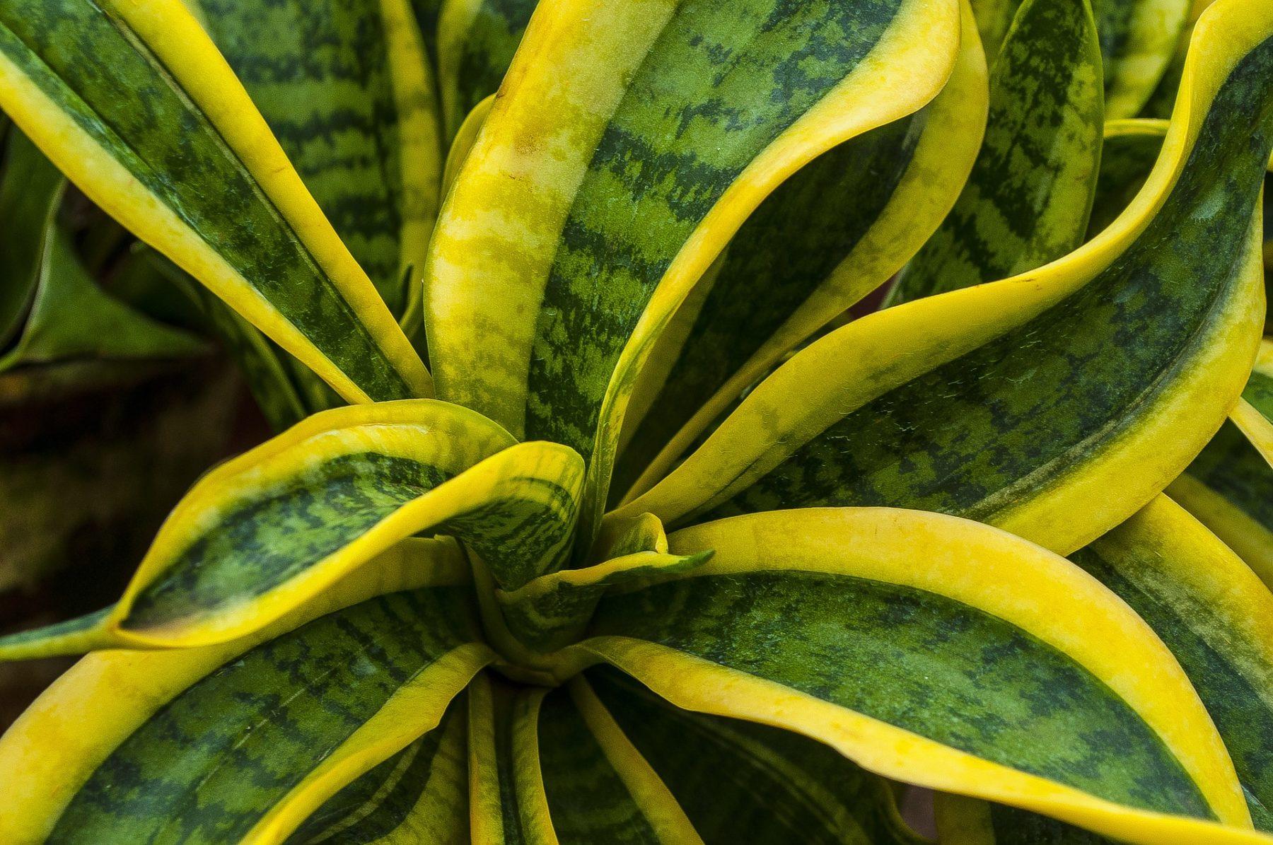 10 robuste zimmerpflanzen die wirklich pflegeleicht sind. Black Bedroom Furniture Sets. Home Design Ideas