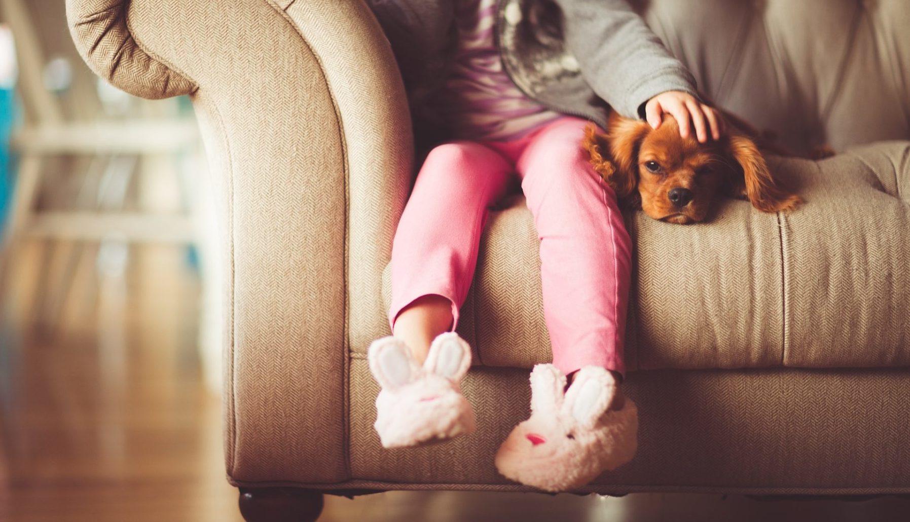 Haustier auf Couch