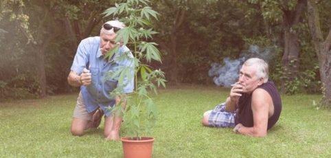 zwei ältere kiffende Männer mit Canabis Pflanze