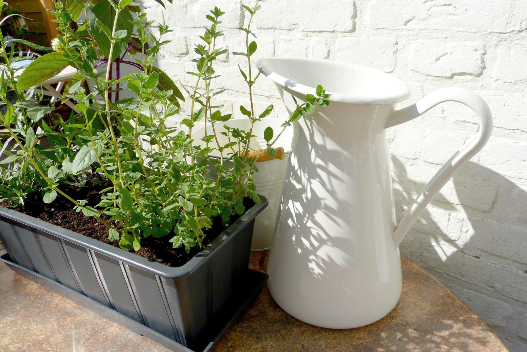 kr uter auf dem balkon pflanzen mit dieser anleitung gelingt es. Black Bedroom Furniture Sets. Home Design Ideas