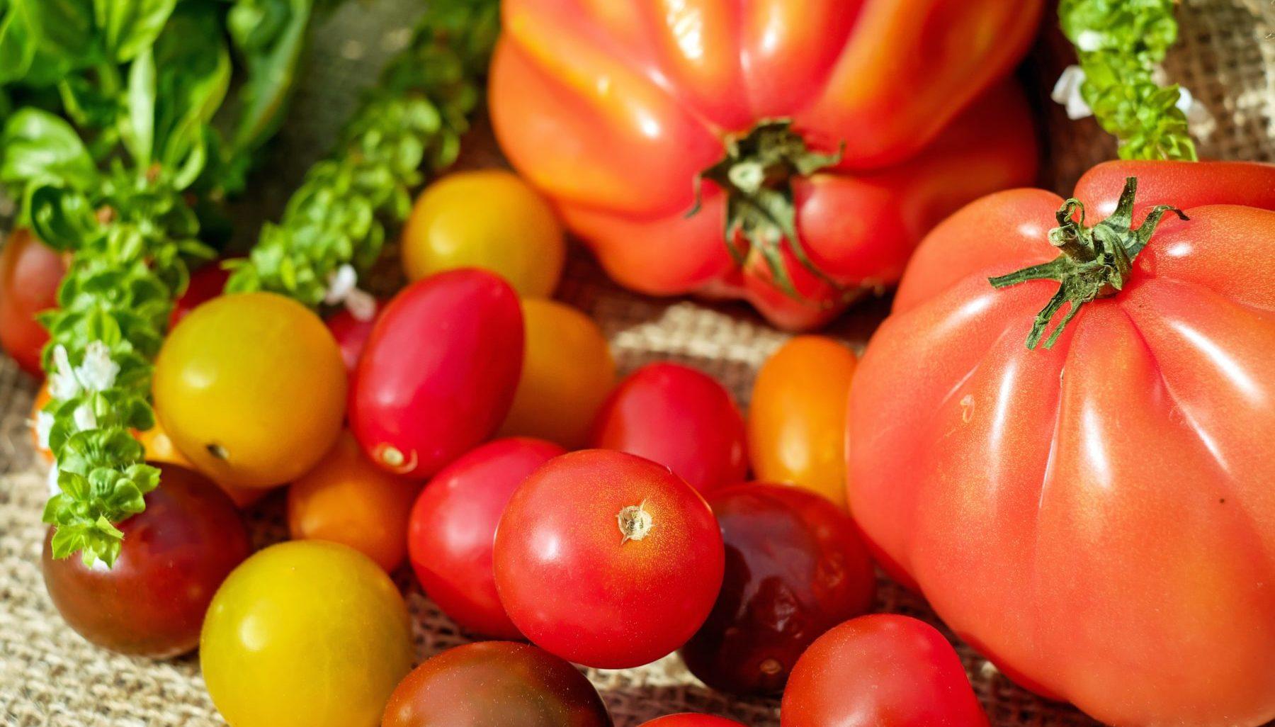 Verschiedene Tomaten, gelb und rot