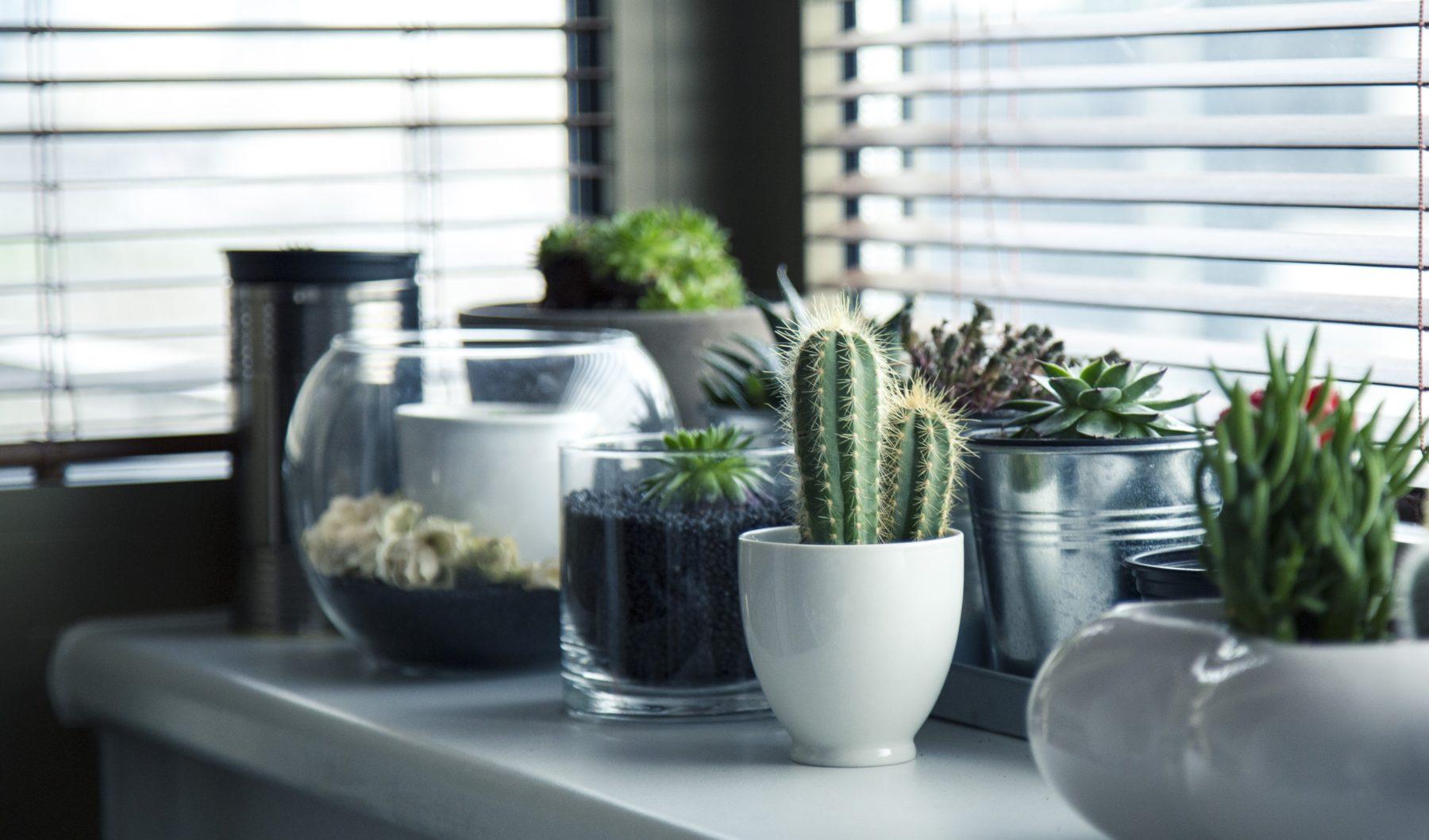 8 robuste zimmerpflanzen die besonders wenig wasser brauchen. Black Bedroom Furniture Sets. Home Design Ideas
