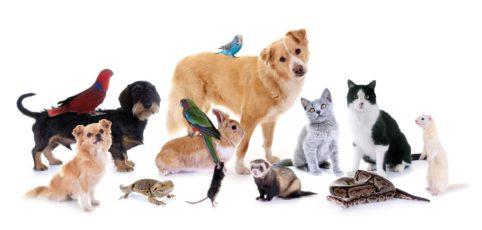 verschiedene Haustiere nebeneinander