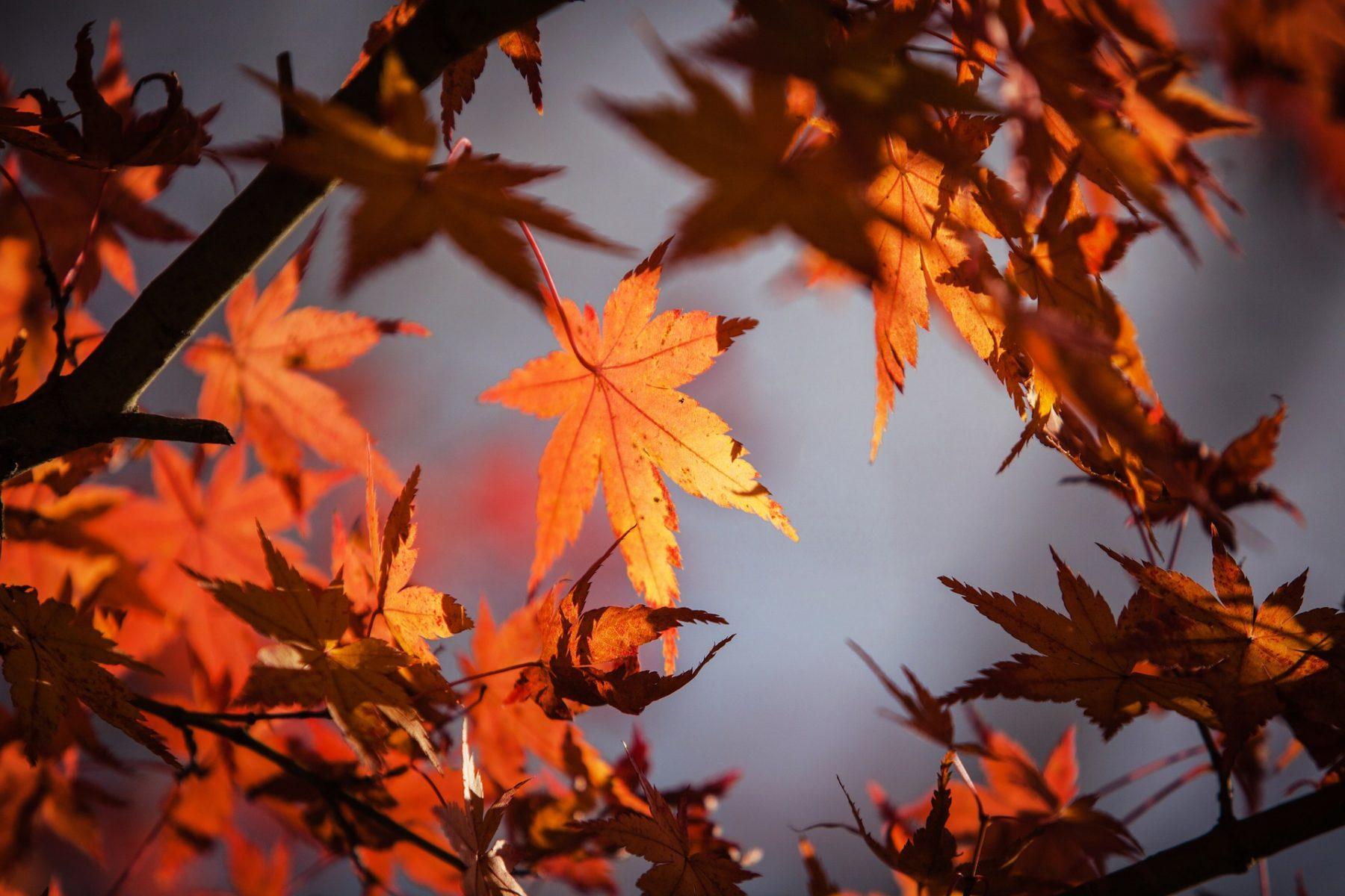 Blätter und Laub
