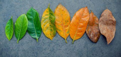 vom grünen Blatt alle Abstufungen bis zum Herbstlaub