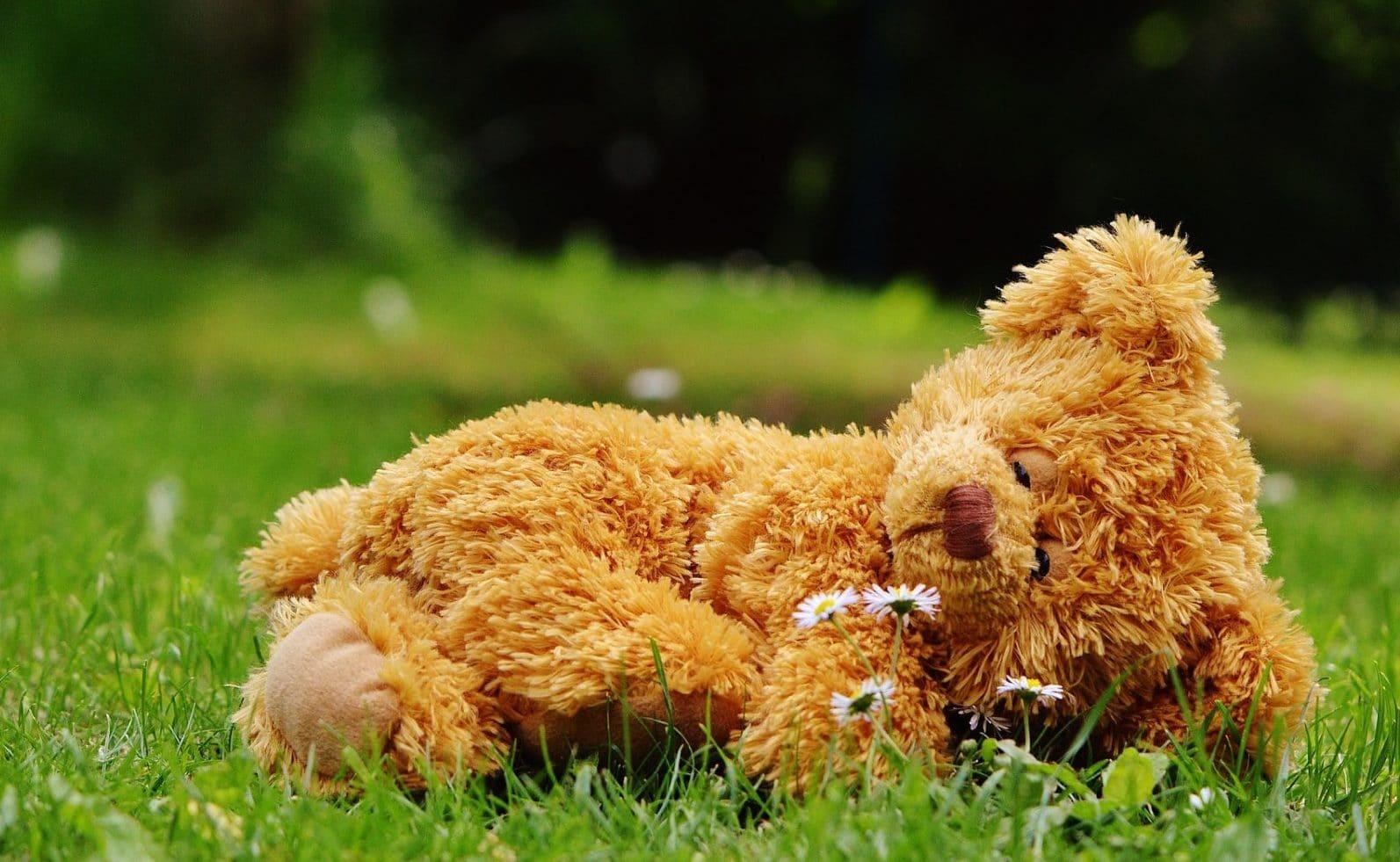 schlafender Bär auf einer grünen Wiese