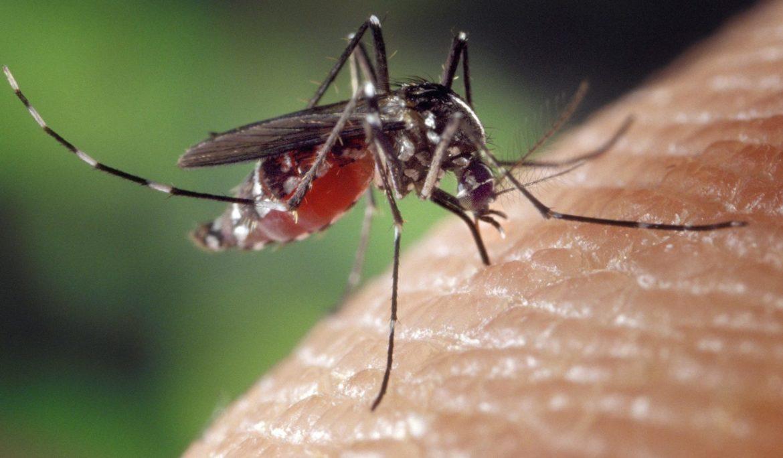 Stechmücke sticht gerade in die Haut eines Menschen