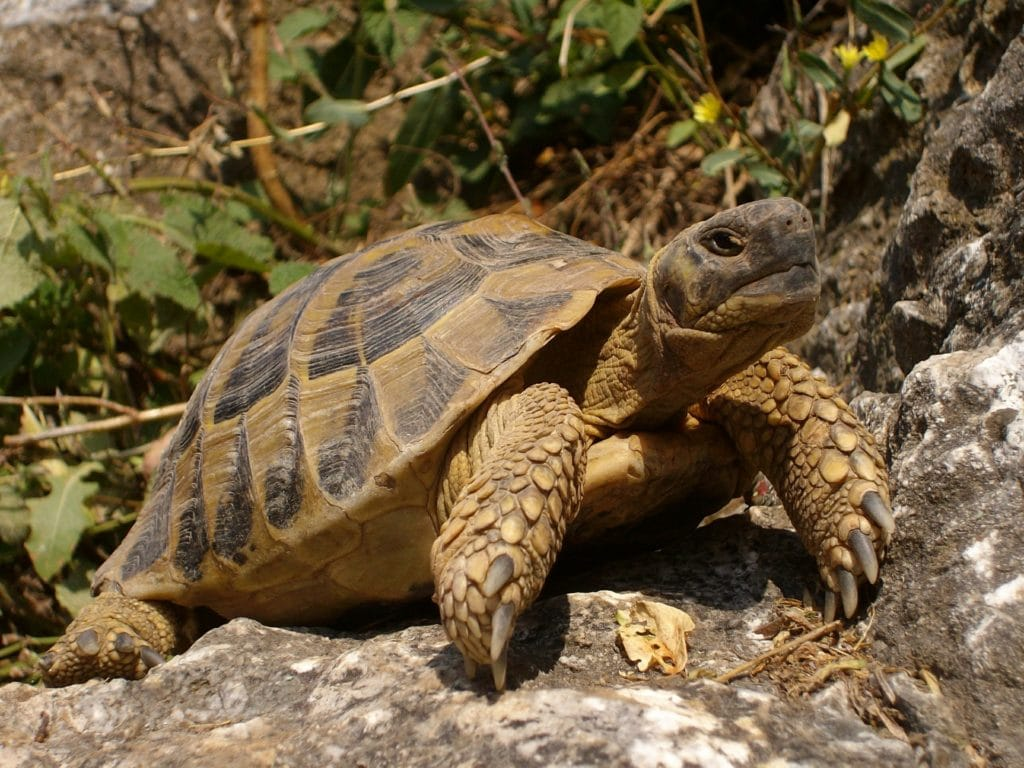 Schildkröte in Natur