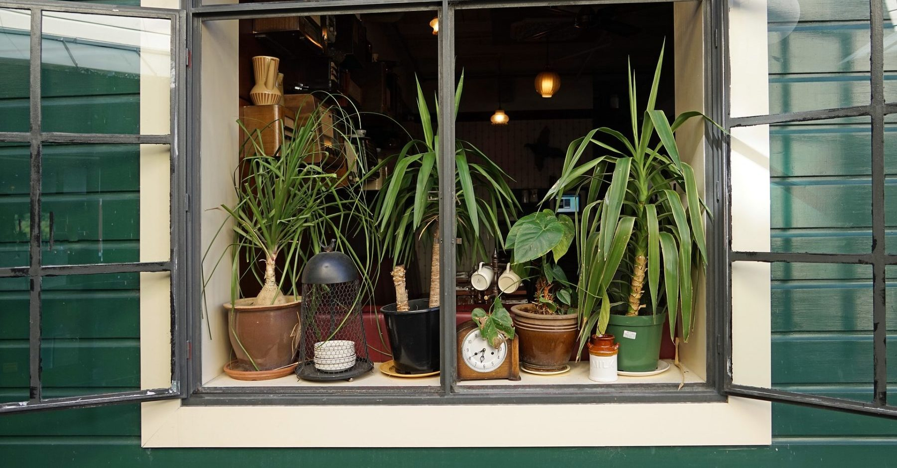 Grüne Zimmerpflanzen am Fensterbrett