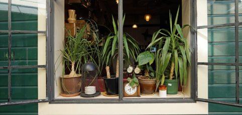 Wir erklären Dir worauf es beim düngen deiner Zimmerpflanzen ankommt
