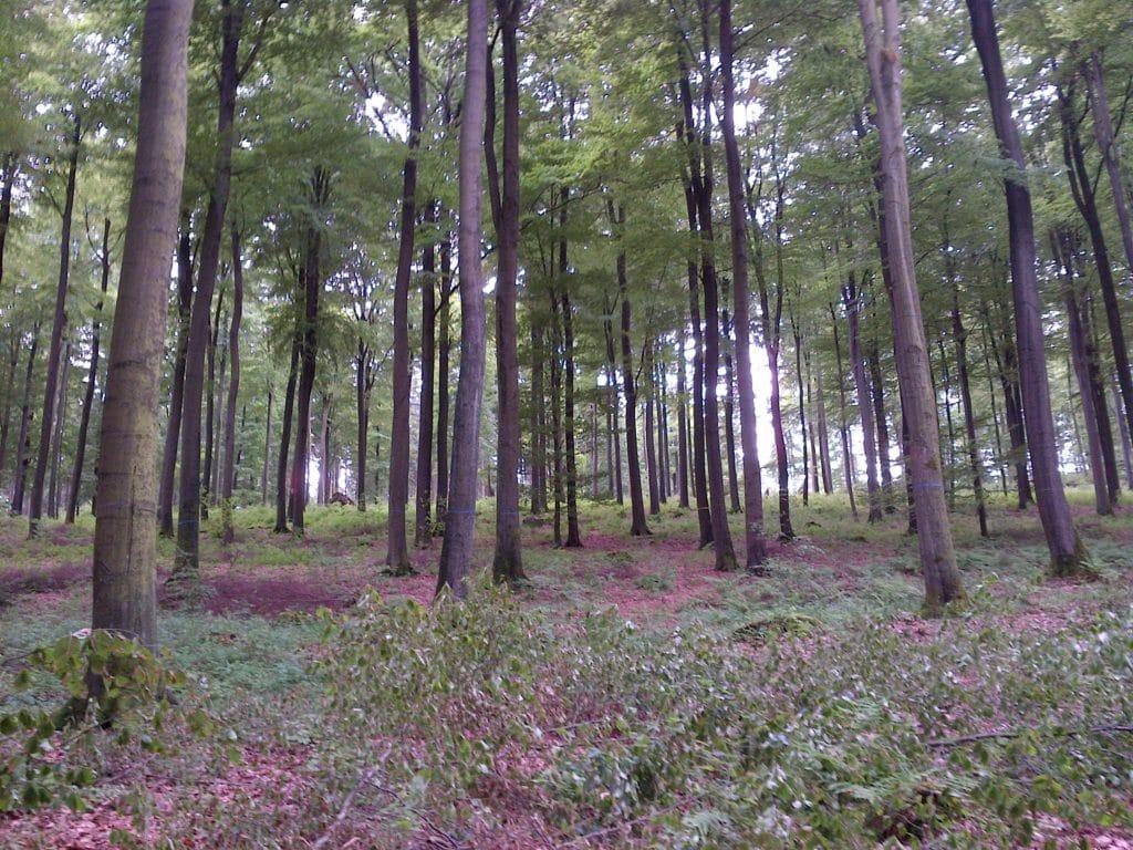 Blick in den Ruhwald
