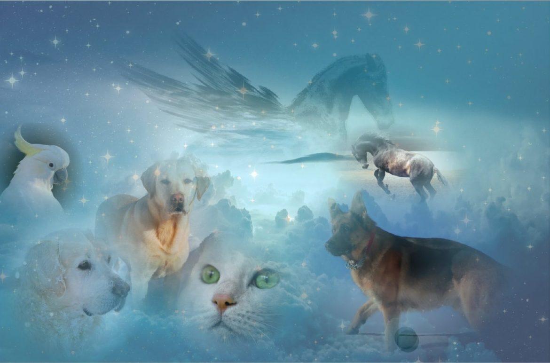 gestorbene Haustiere im Himmel
