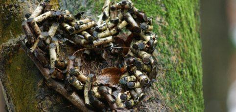 Herz aus Zweigstücken an einem Baum im Friedwald