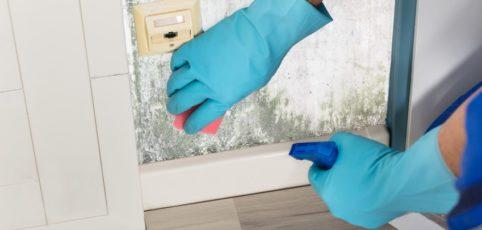jemand entfernt mit einem Schwamm und blauen Gummihandschuhen Schimmel von einer Wand