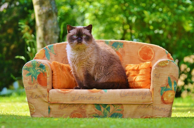 Katze am Sofa