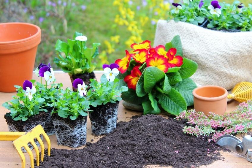 Pflanzen, Töpfe, Erde und Werkzeug zum umtopfen