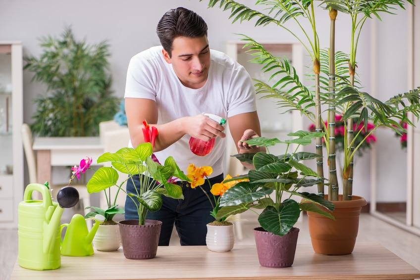 sch dlinge bei zimmerpflanzen erkennen und behandeln. Black Bedroom Furniture Sets. Home Design Ideas