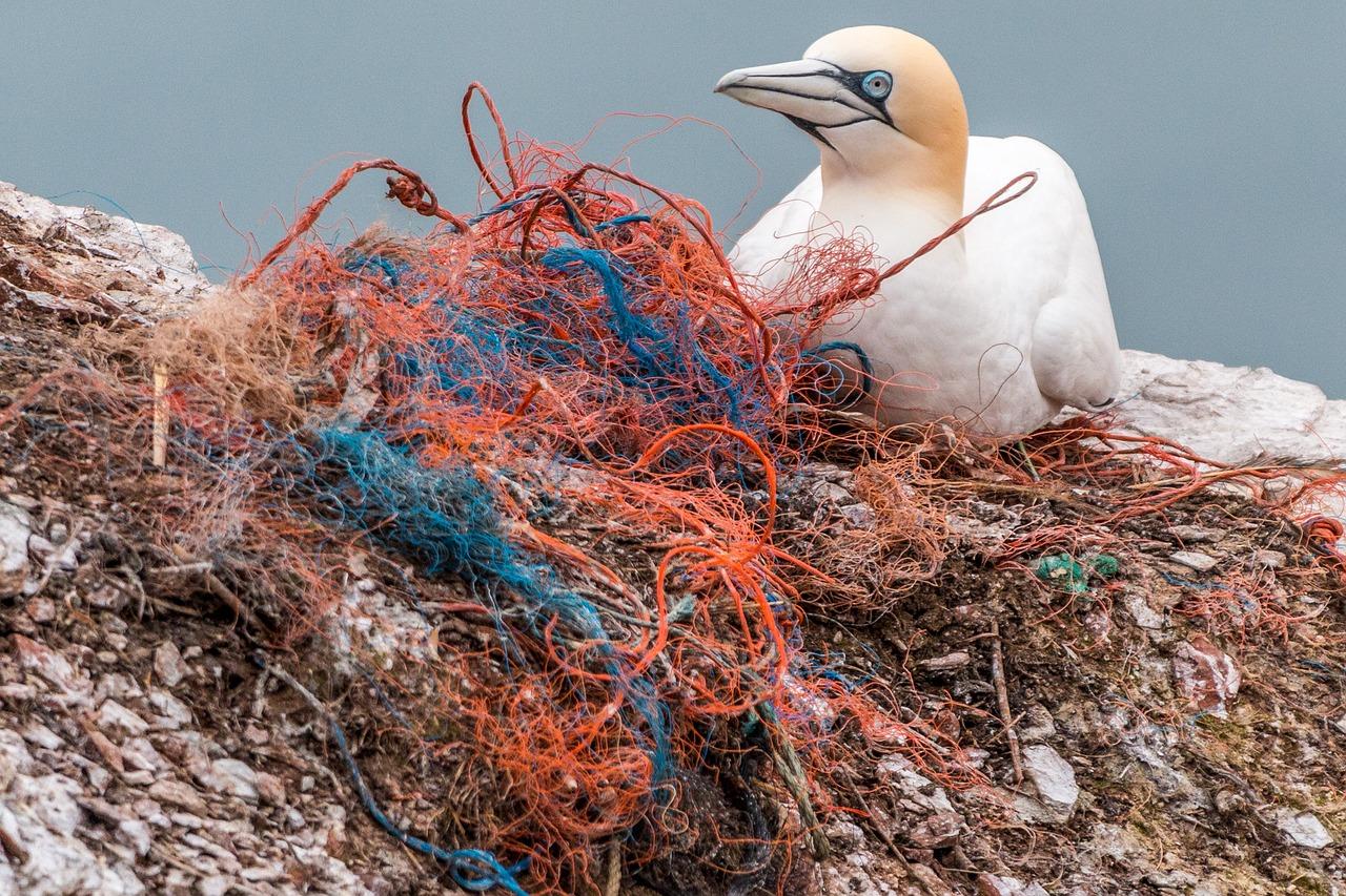 Möve in Plastikmüll gefangen