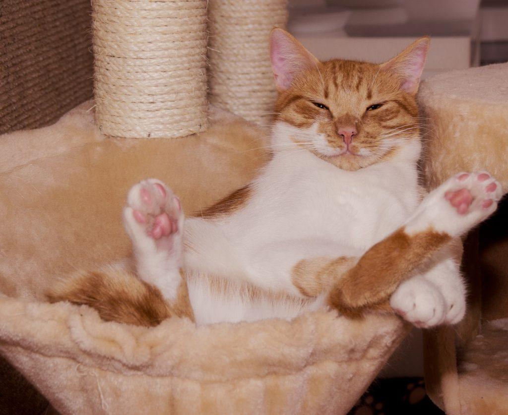 Katze voll gechilled