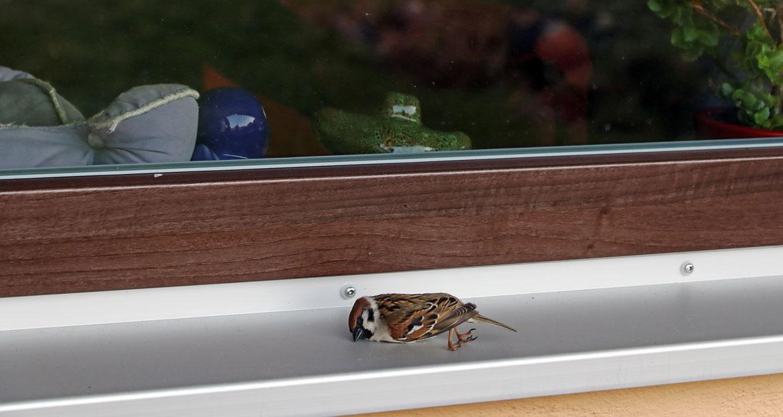 Vogeltod an Glasflächen vorbeugen: So geht's!