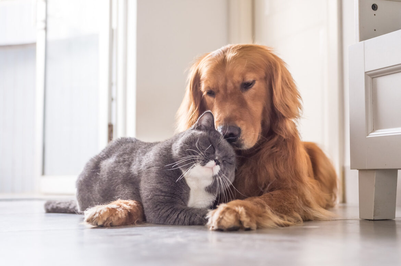 Haustiere: Hund, Katze, Maus – Welches Tier passt zu meiner Familie?